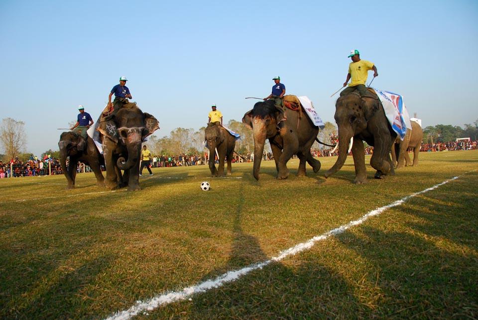 مملكة نيبال تستضيف بطولة بولو الأفيال