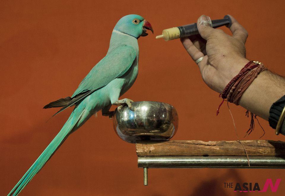 الهند: معرض لعجائب الطيور في كالكوتا
