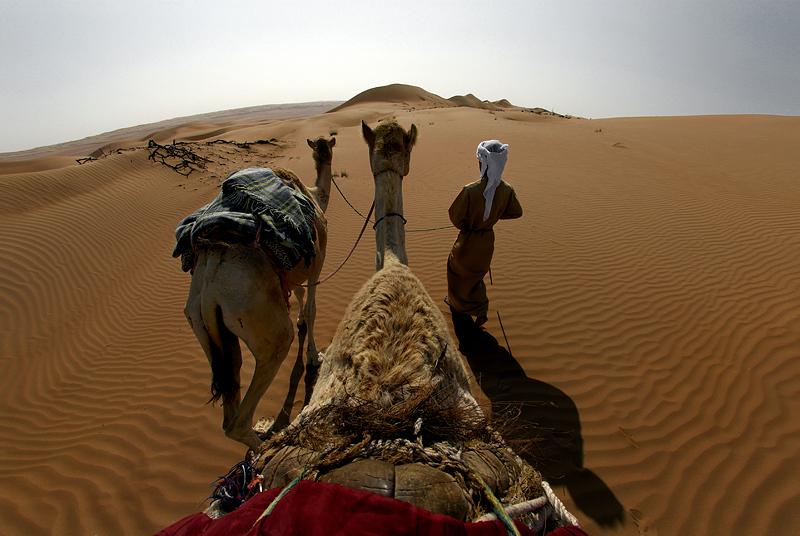 لغة الأشياء / سندباد الصحراء